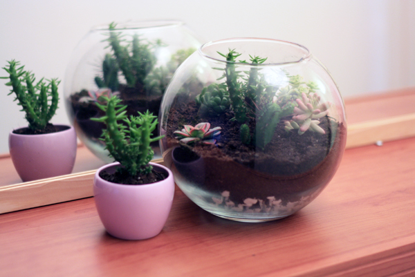 diy un terrarium miniature mango and salt. Black Bedroom Furniture Sets. Home Design Ideas