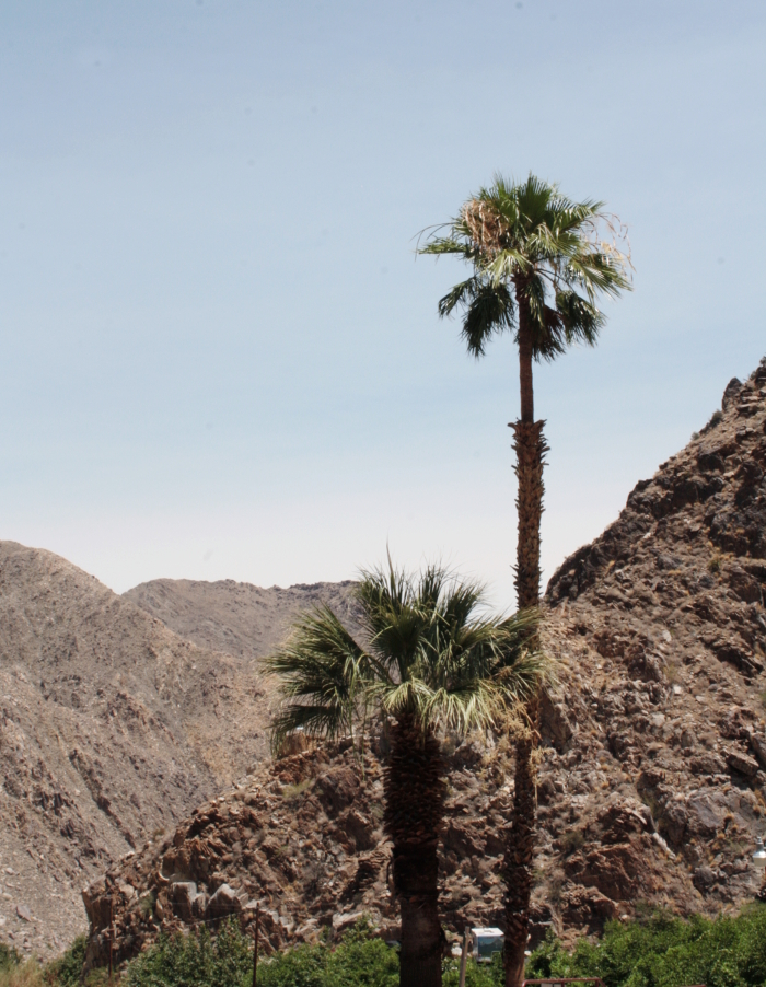 palmsprings_architecture4
