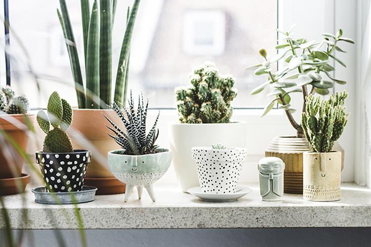deco-plantes-interieur