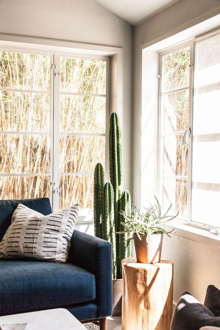 deco-plantes-interieur4