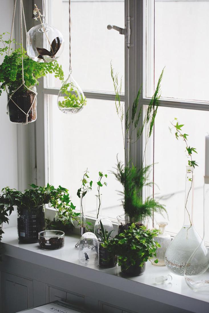 deco-plantes-interieur7
