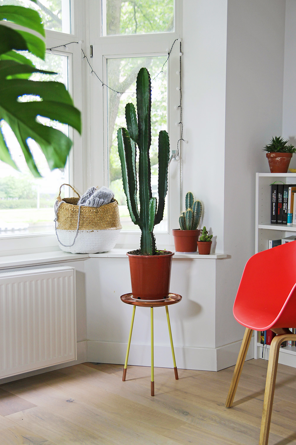 mes plantes cactus mango and salt. Black Bedroom Furniture Sets. Home Design Ideas