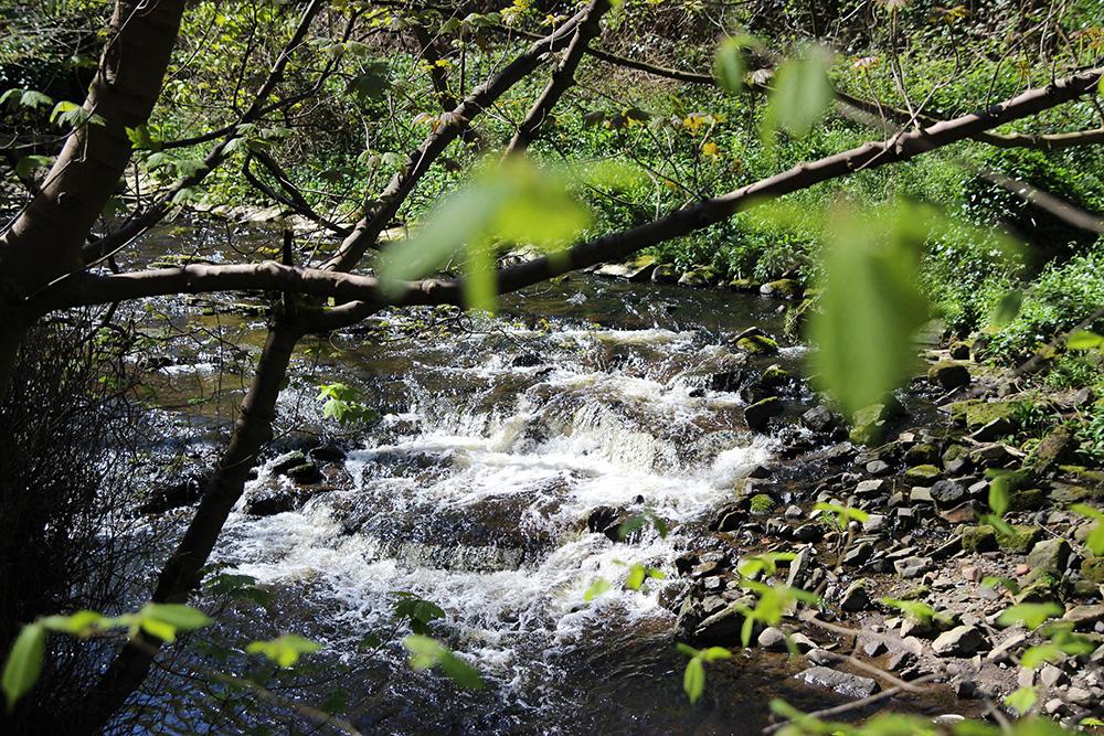 dean-village-water-leith3