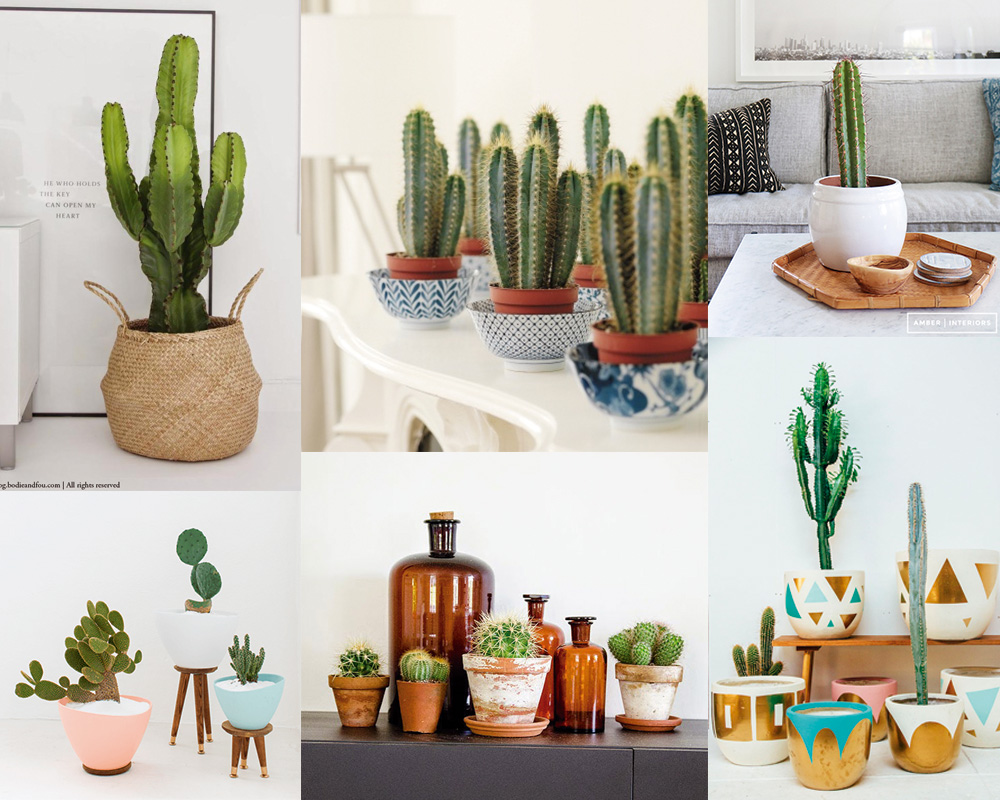 inspirations-cactus-deco