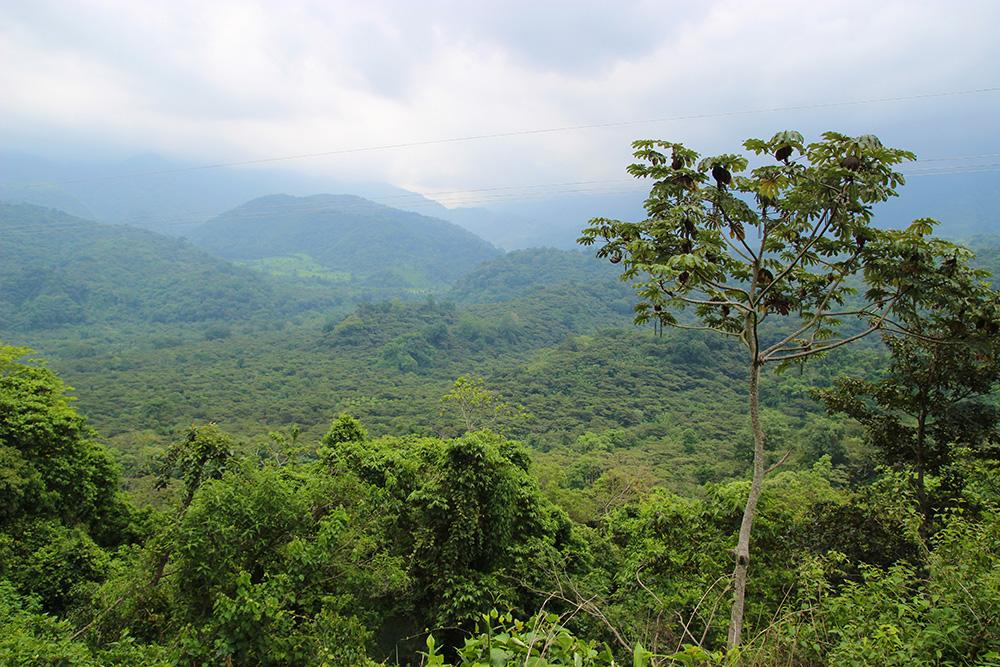 plantation-elpacayal3