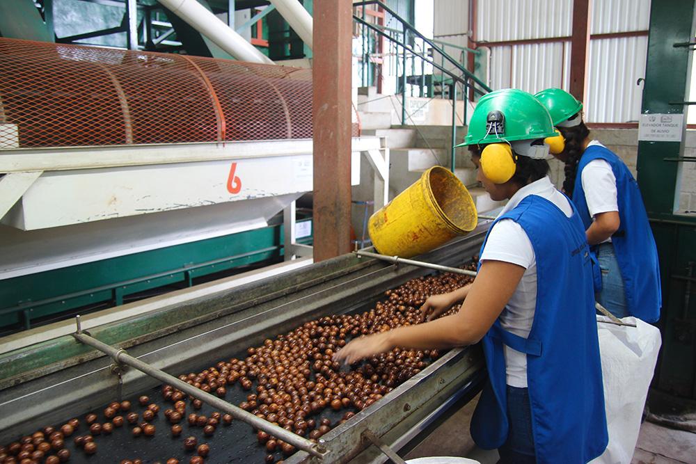 usine-macadamia-depulpage2