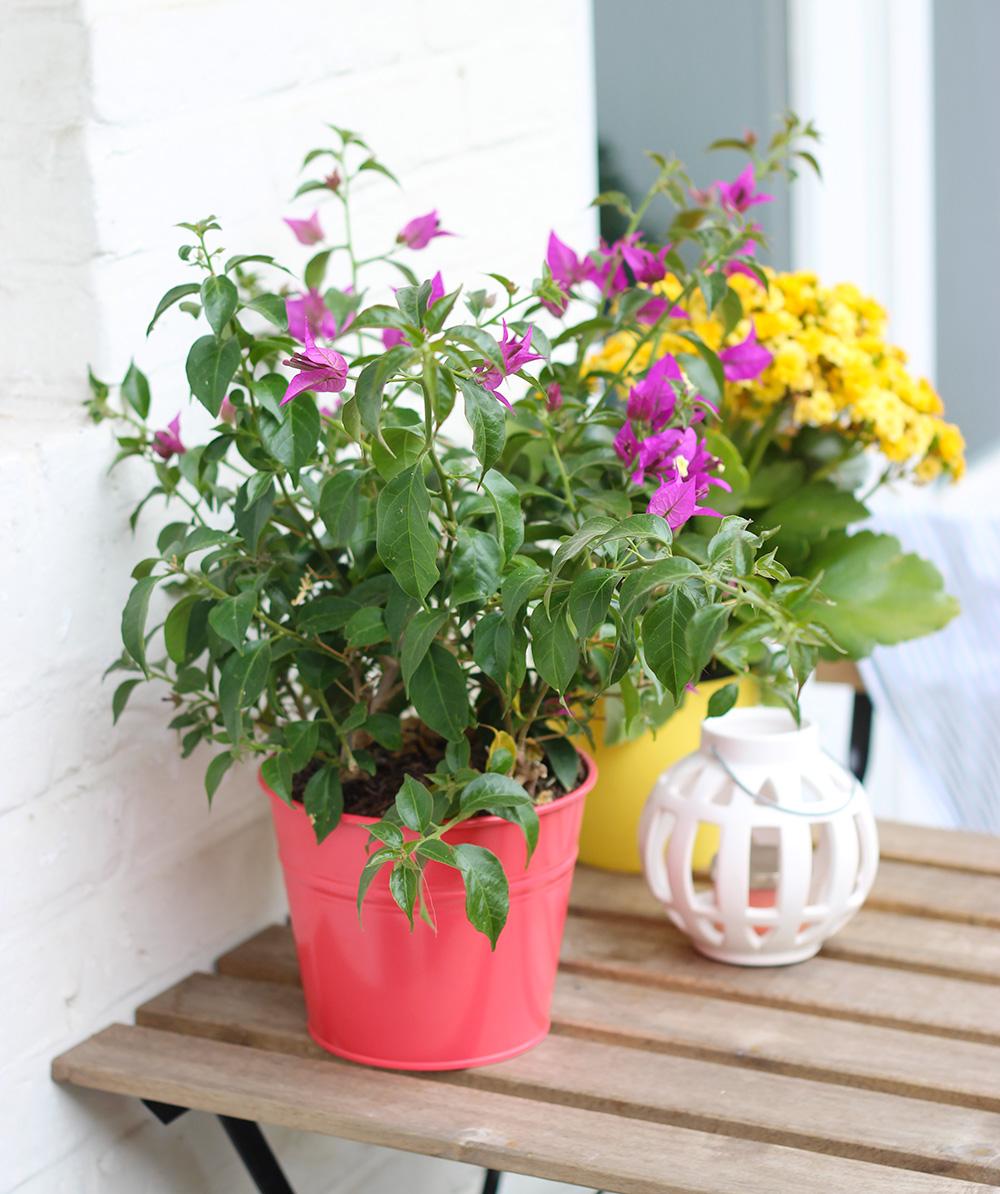 fleurs-balcon