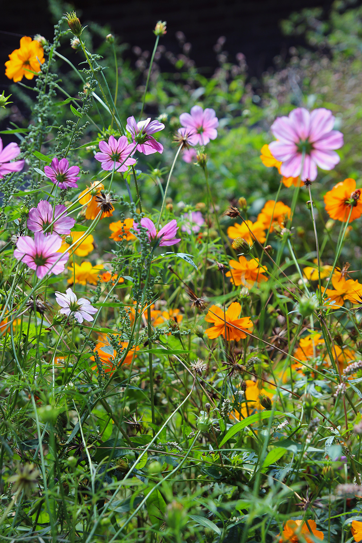 hortusbotanicus-amsterdam-jardins3
