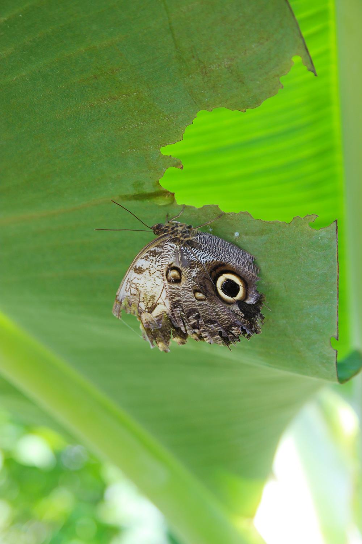 hortusbotanicus-amsterdam-petitesserres7