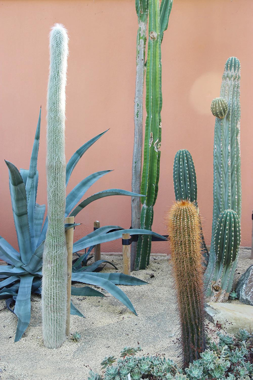 hortusbotanicus-amsterdam-serrecactus1