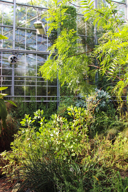 hortusbotanicus-amsterdam-serretropicale2