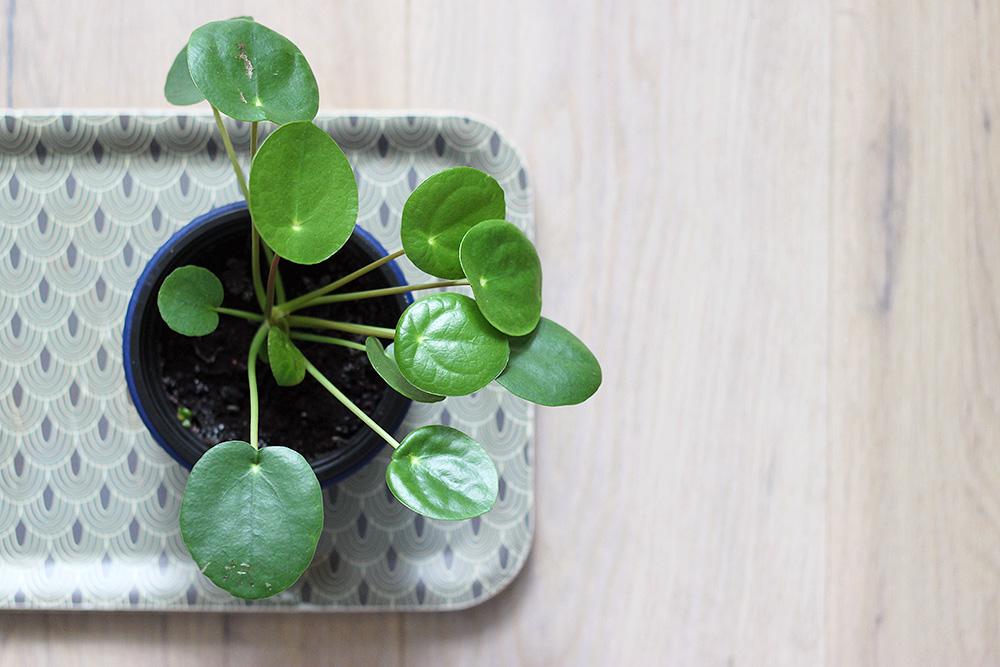 mes plantes succulentes mango and salt. Black Bedroom Furniture Sets. Home Design Ideas