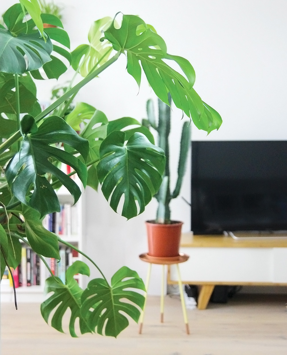 plantes d appartement faciles