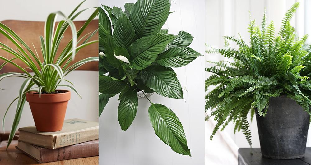plantes-pieces-sombres