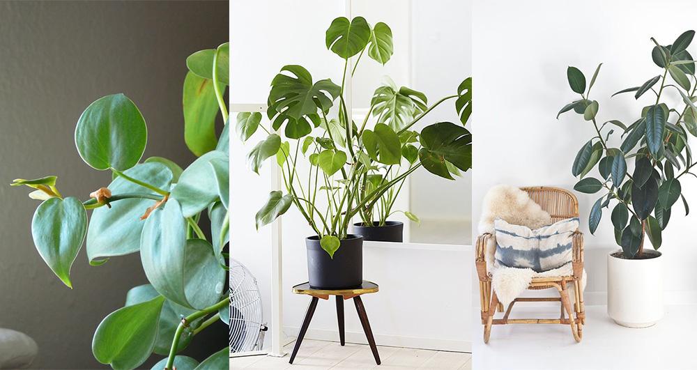 plantes-poussent-bien