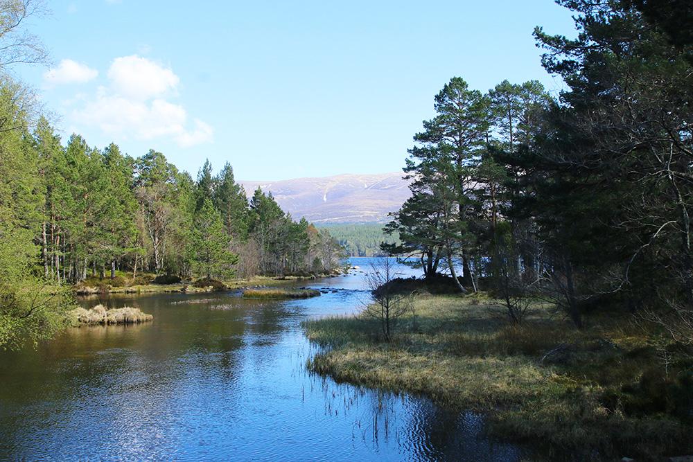 highlands-ecosse-aviemore4