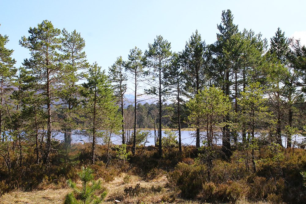 highlands-ecosse-aviemore7