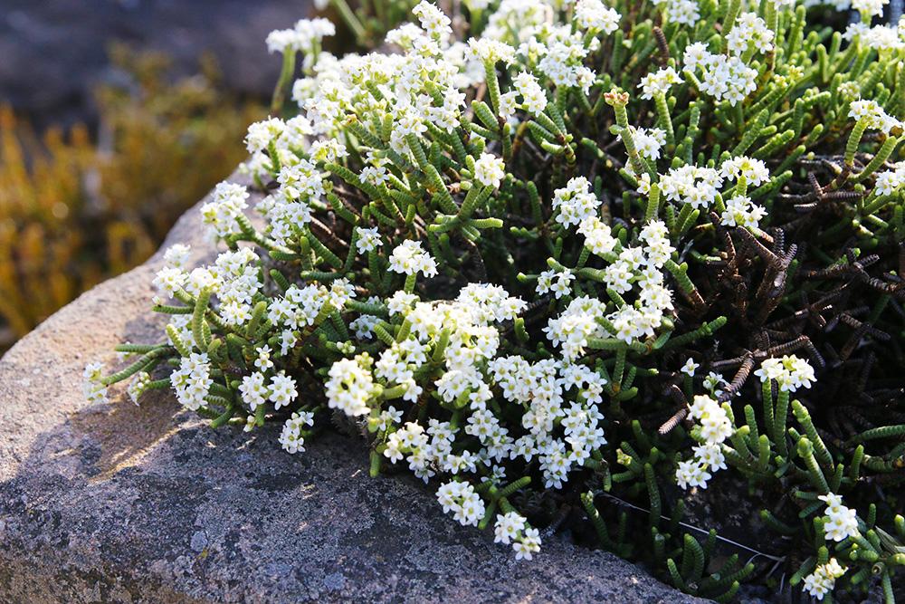 edimbourg-jardin-botanique2