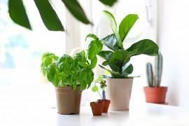 favoris-plantes-mai2017