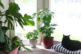 plantes-vertes-arbustes-exotiques