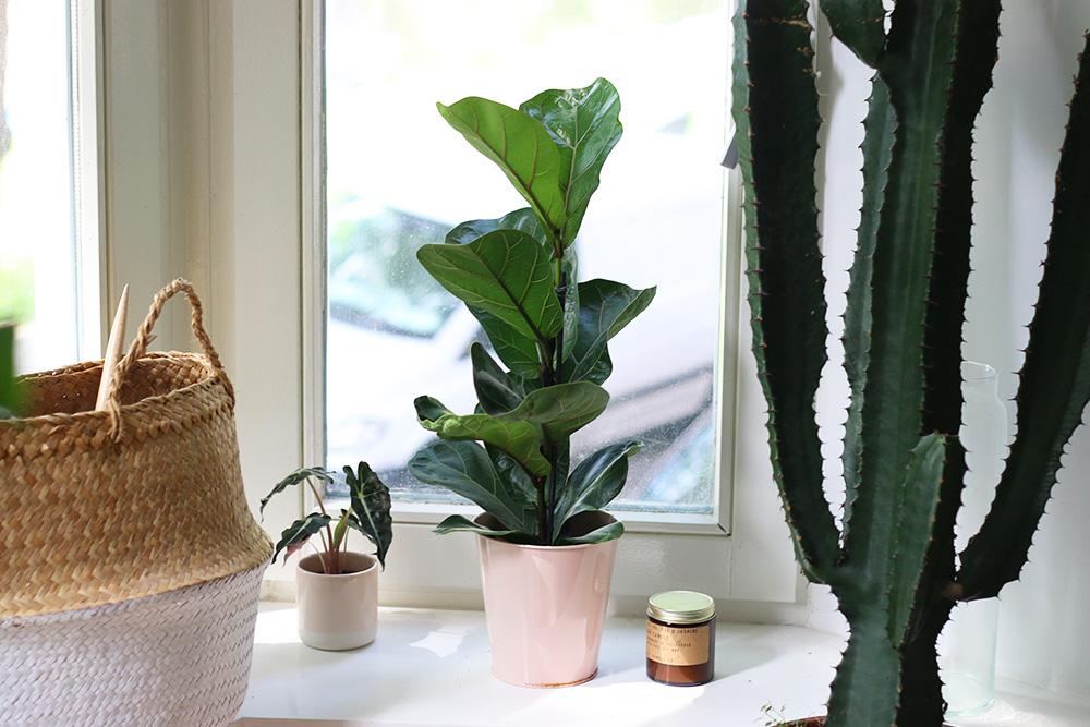 plantes-vertes-arbustes-exotiques2