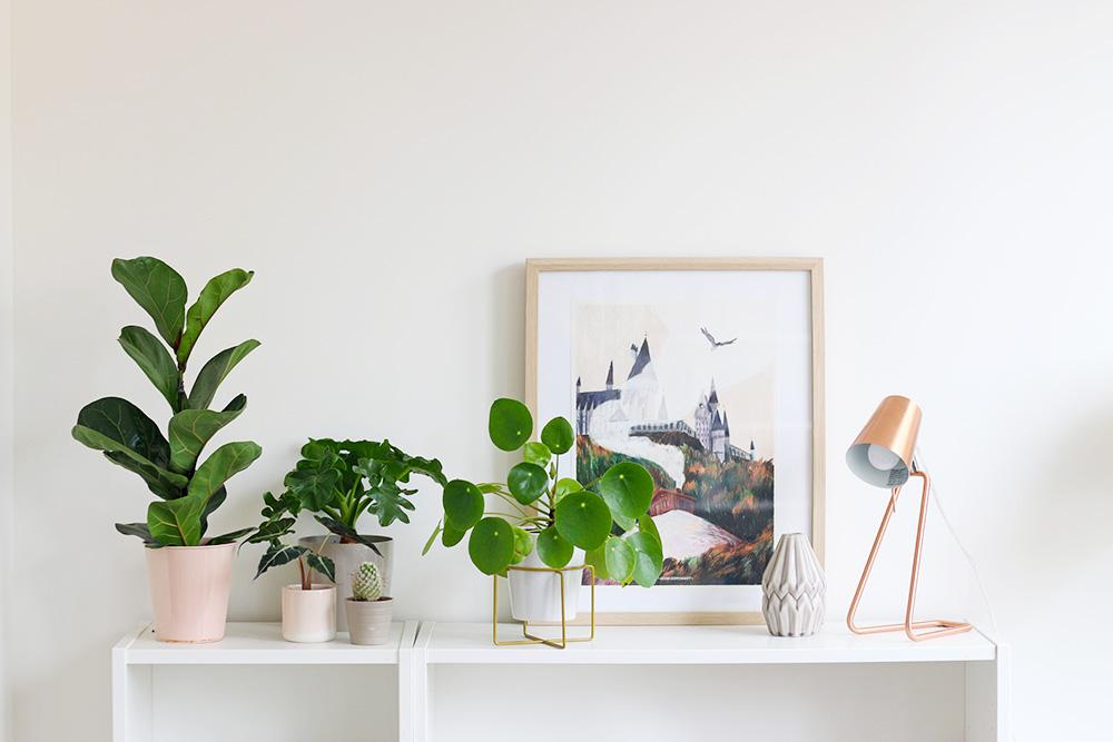 plantes-etageres