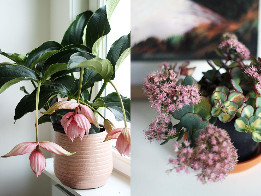 plantes-favorites-octobre