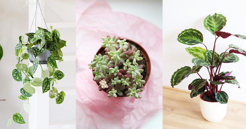 favoris-janvier2017-plantes