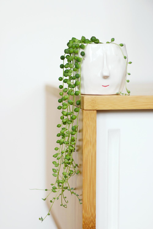 chaine-perles-senecio3