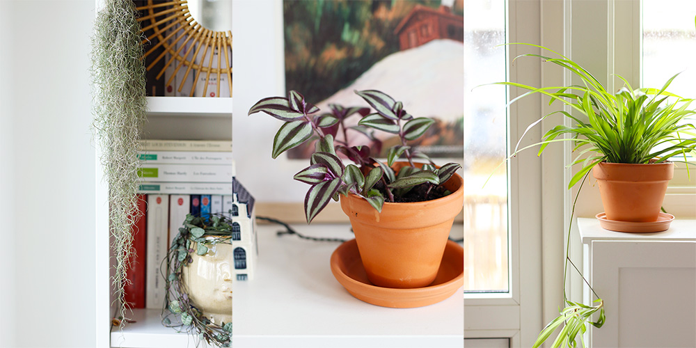 favoris-fevrier-plantes