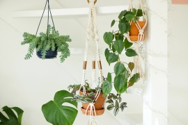 mes-plantes-suspendues