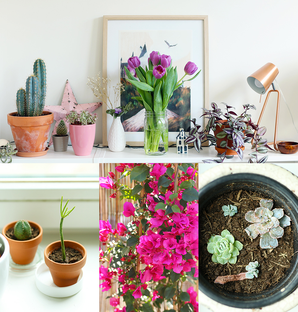 favoris-plantes-avril2018