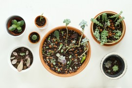diy-boutures-succulentes-plantes-grasses