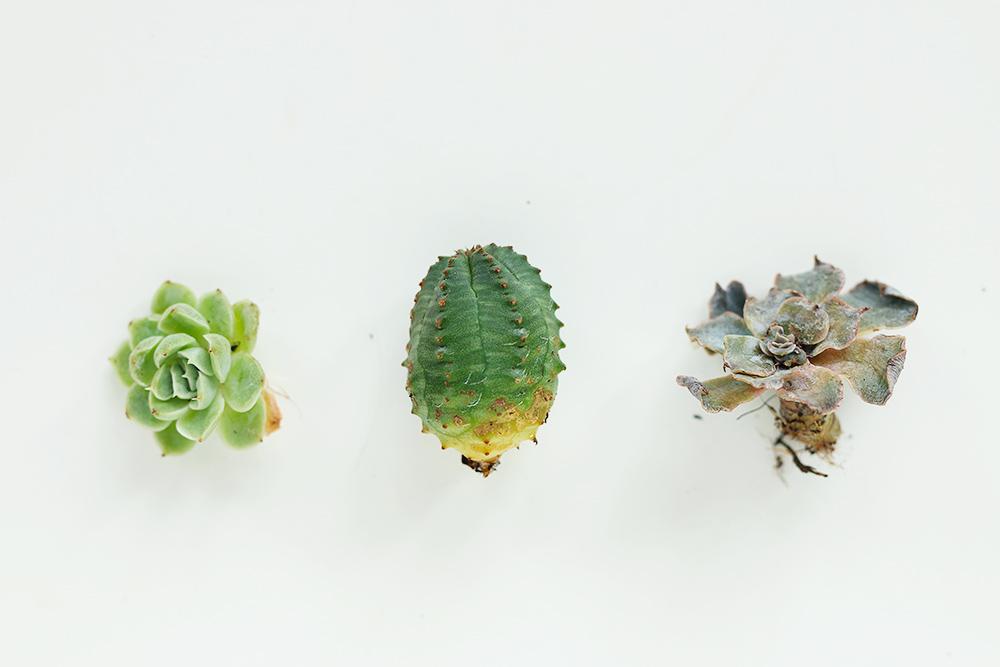 diy-boutures-succulentes-plantes-grasses4