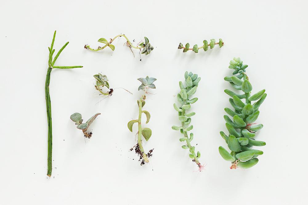 diy-boutures-succulentes-plantes-grasses6