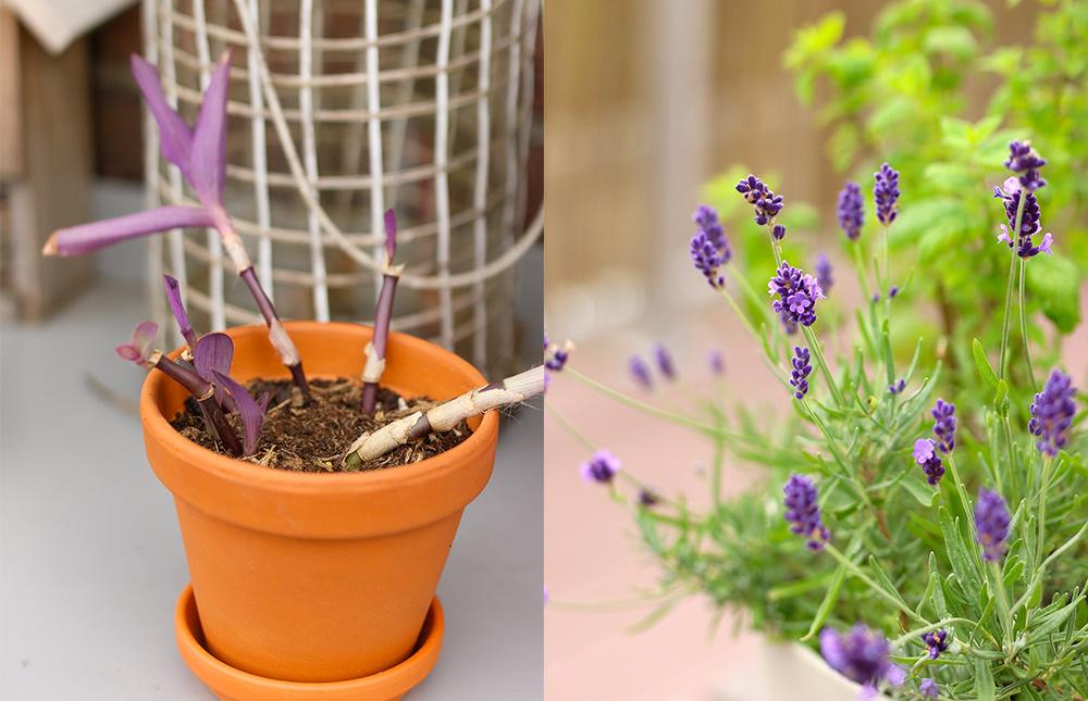 plantes-balcon-mai2018