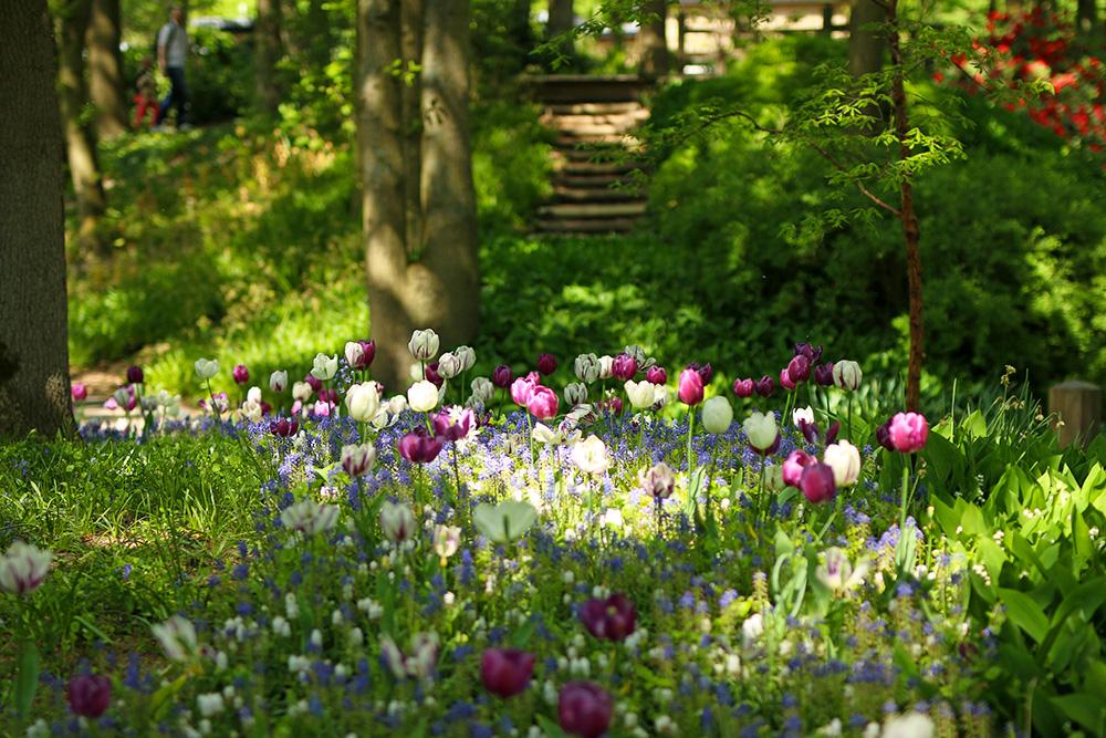 tulipes-keukenhof