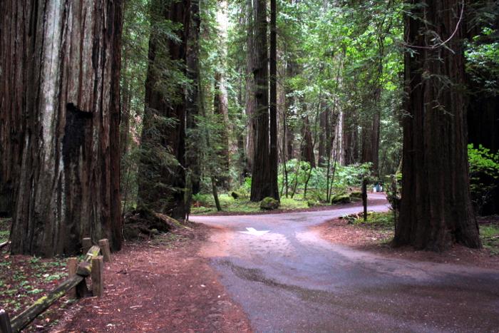 redwoods9