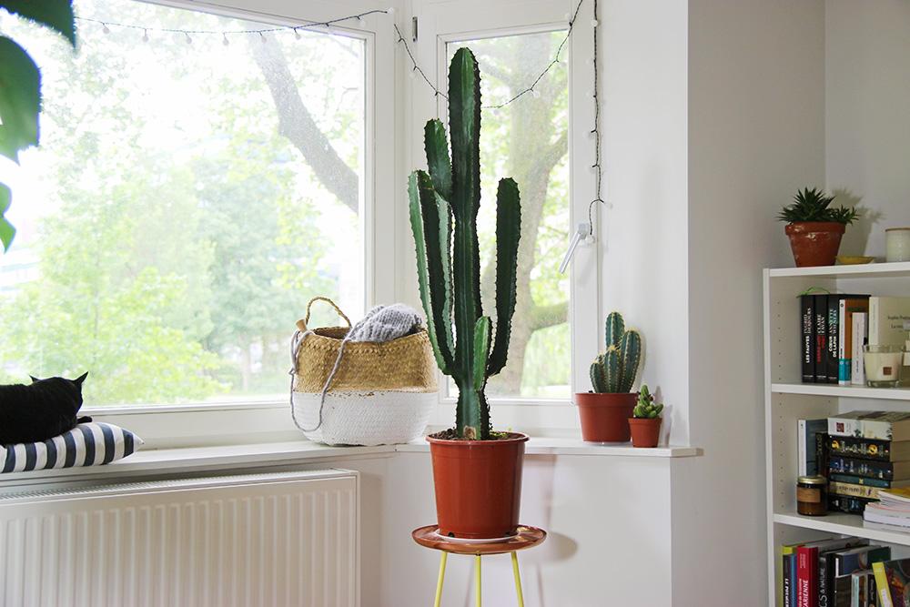 Mes plantes cactus mango and salt for Plantes interieur sans entretien