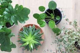 plantes-exotiques