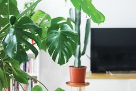 plantes-interieur-faciles