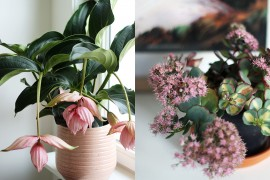 plantes-favorites-octobre