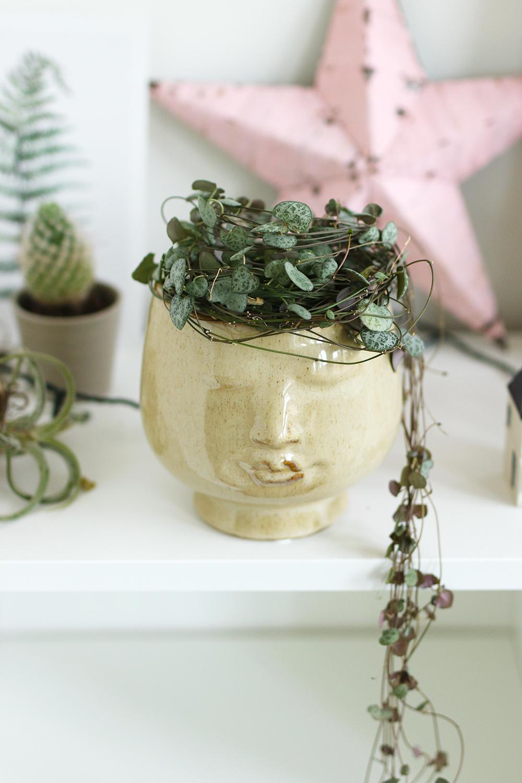 Suspension Pour Plantes D Intérieur mes plantes // les suspensions et plantes tombantes - mango
