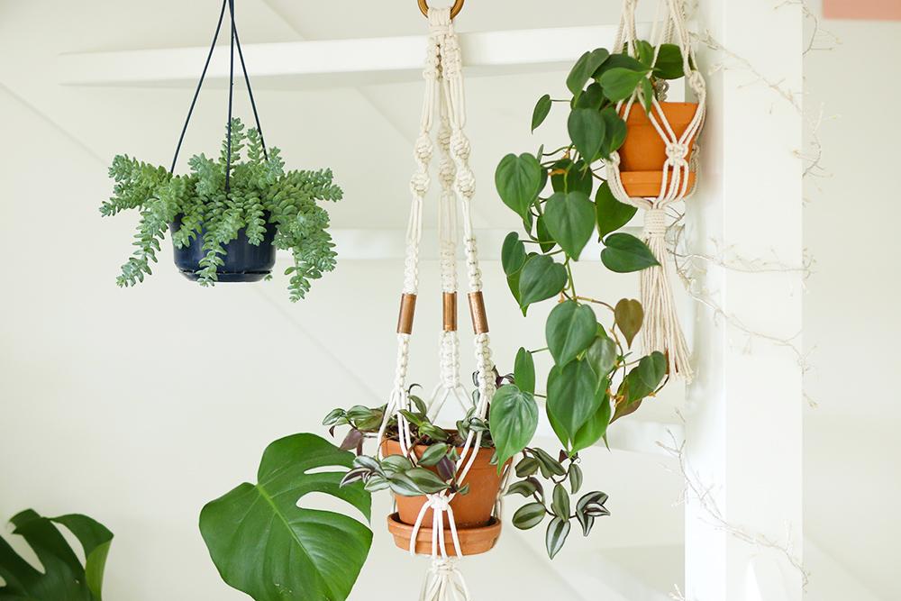 mes plantes les suspensions et plantes tombantes mango and salt. Black Bedroom Furniture Sets. Home Design Ideas