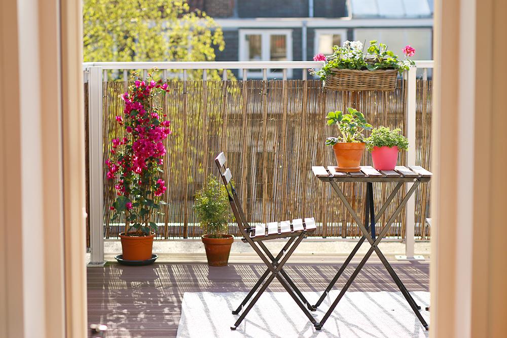mes 15 plantes chouchoutes pour d corer un balcon mango. Black Bedroom Furniture Sets. Home Design Ideas