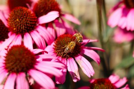jardiner-abeilles