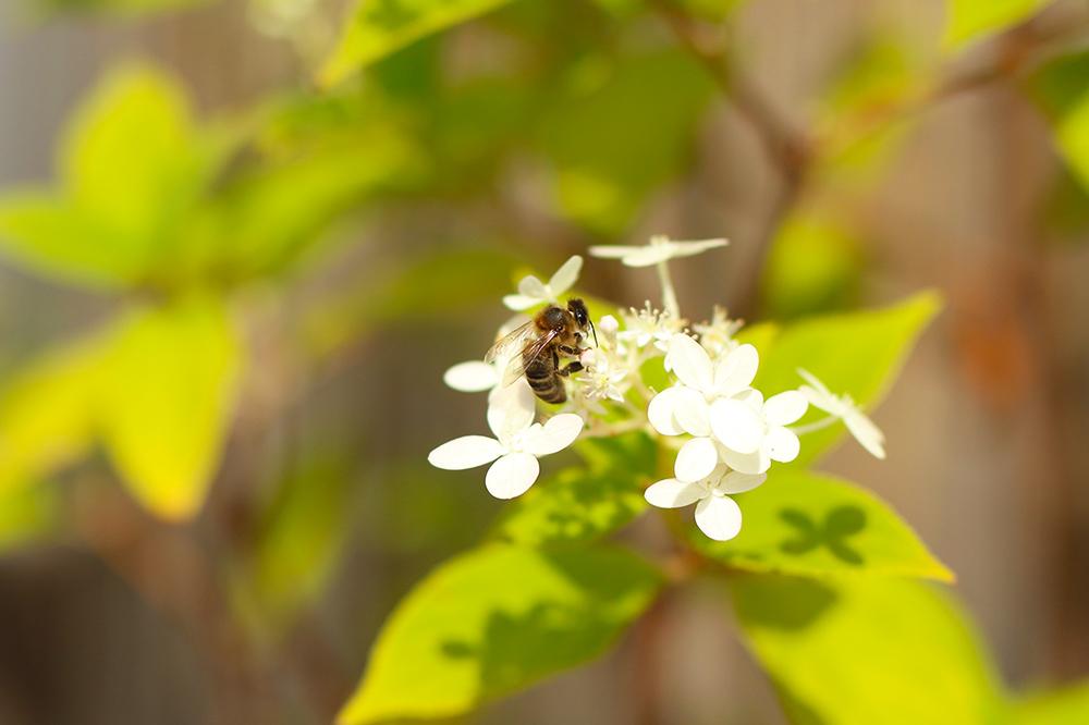 jardiner-abeilles3