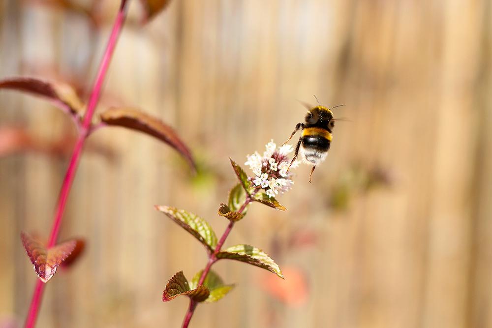 jardiner-abeilles4