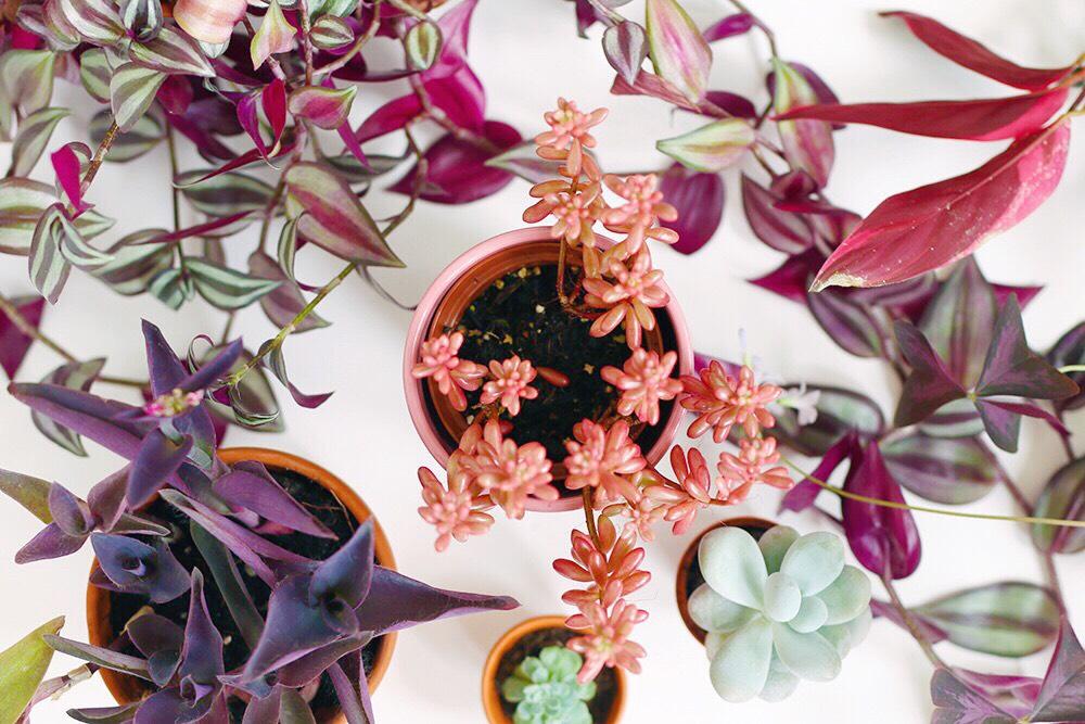 plantes-couleurs-pas-vertes
