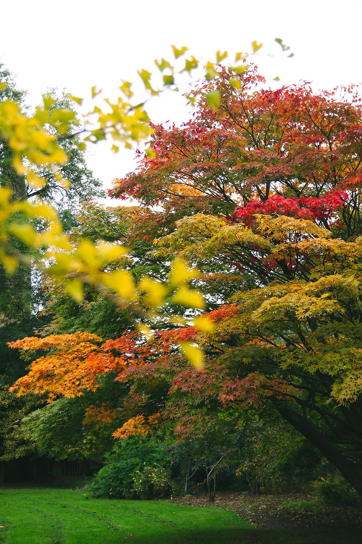 jardin-botanique-glasgow1